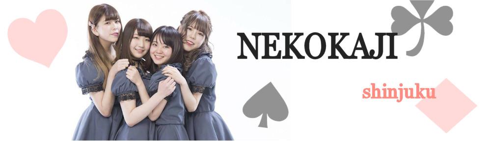 ネコカジ|新宿にあるポーカー初心者専門アミューズメントカジノ